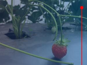 Agrofilmes
